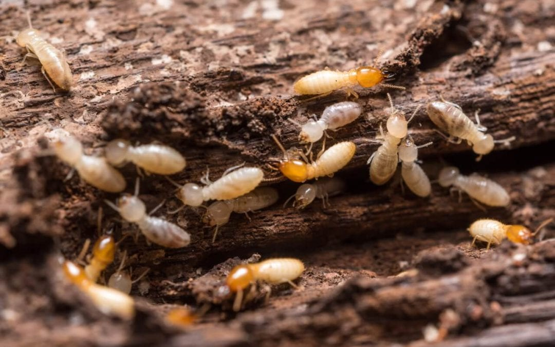 Damaged wood can be a sign of termites in your home
